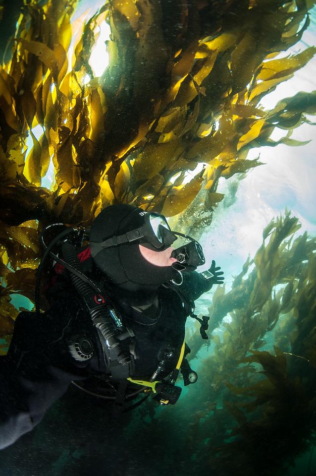 cps_diver-seaweed