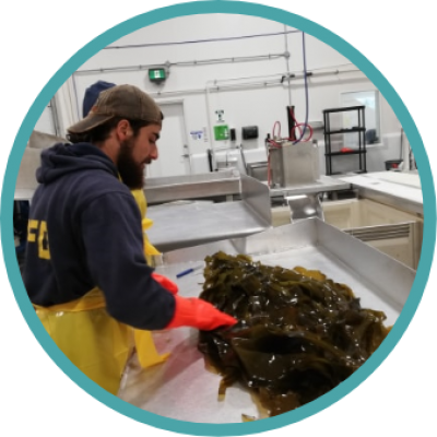 kelp-product-development@2x